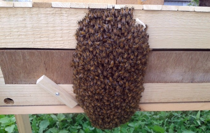 140623 swarm
