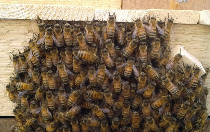 140623 swarm closeup