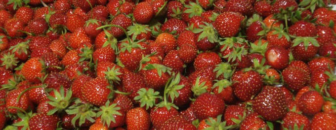 strawberries (2)