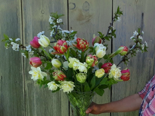 SEASONAL ARRANGEMENT IN A VASE - with specialty tulips, heirloom daffodils, and flowering branches that will continue to open for days