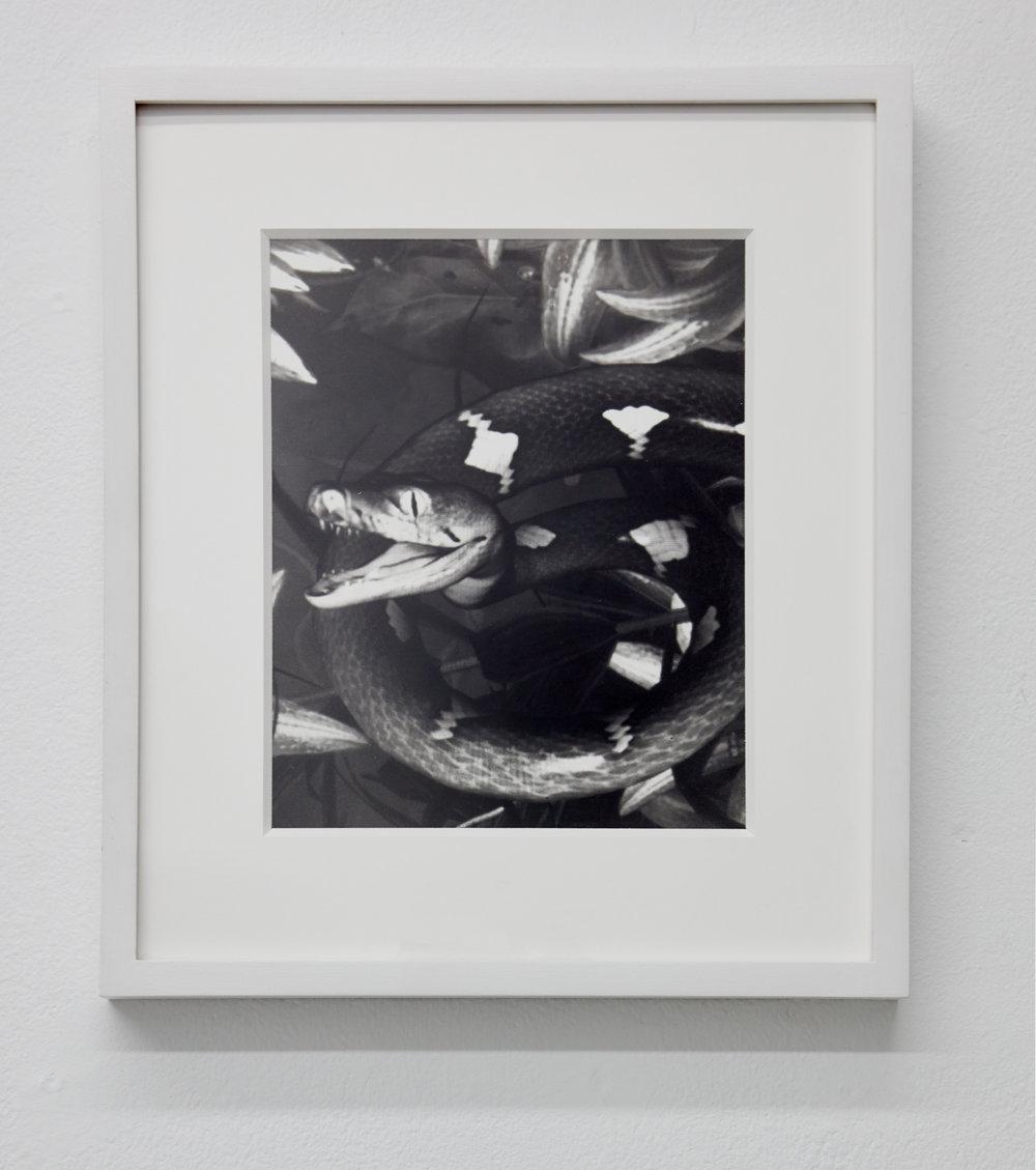 Lombardi,  2018. Gelatin silver print. 10 x 8 inches.