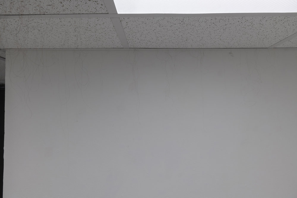 Anagen  (detail), 2018–19. Armstrong ceiling tiles in dropped ceiling in gallery, human hair, glue. 86 x 117 x 203 inches (approximately).