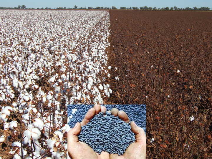 gmo-cotton-web2.png