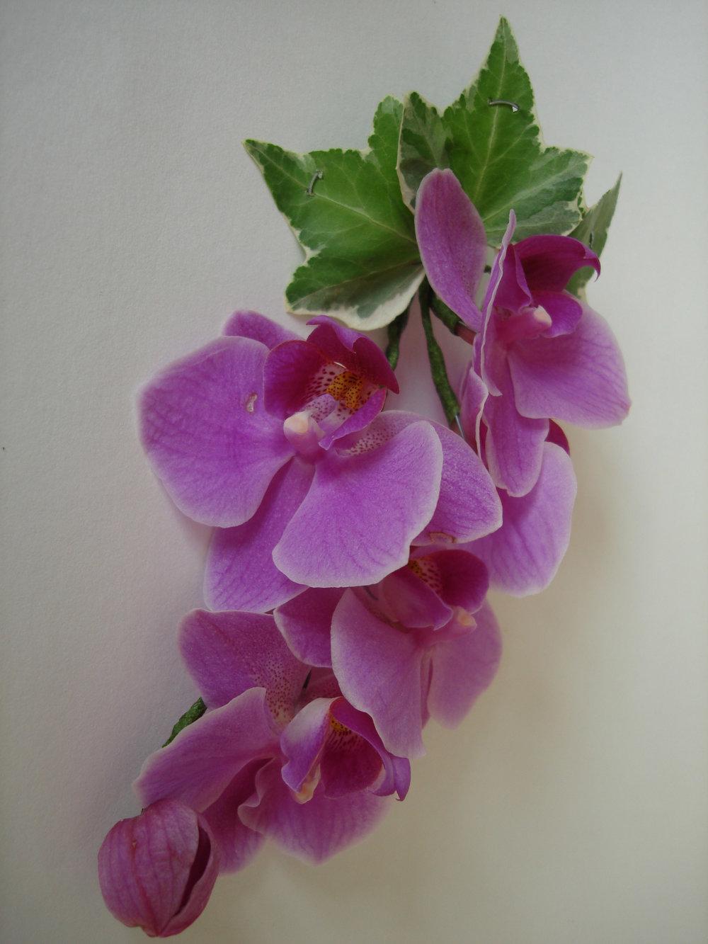 corsage. dendrobium orchid