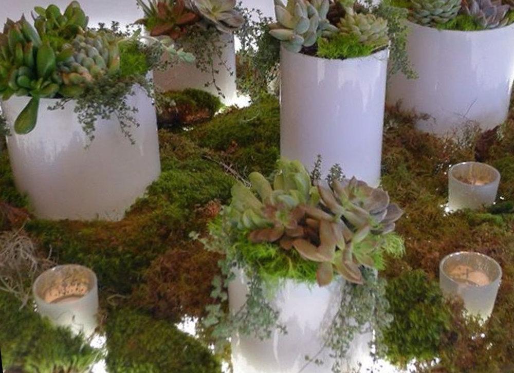 SCAD-succulents.jpg