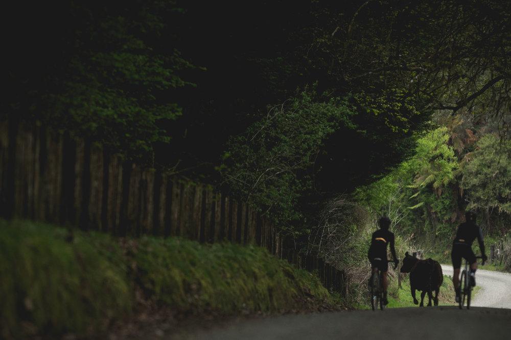 nzcj_ghosttown_bikesanddog.jpg