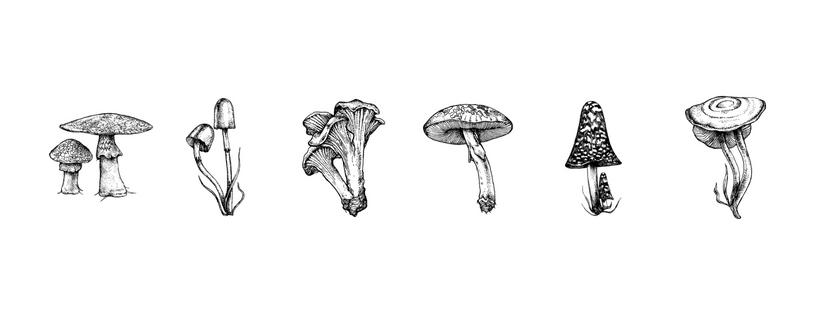 mushroom line.jpg
