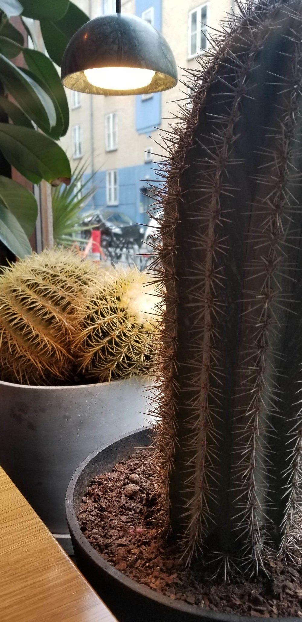 cactus culture.jpg