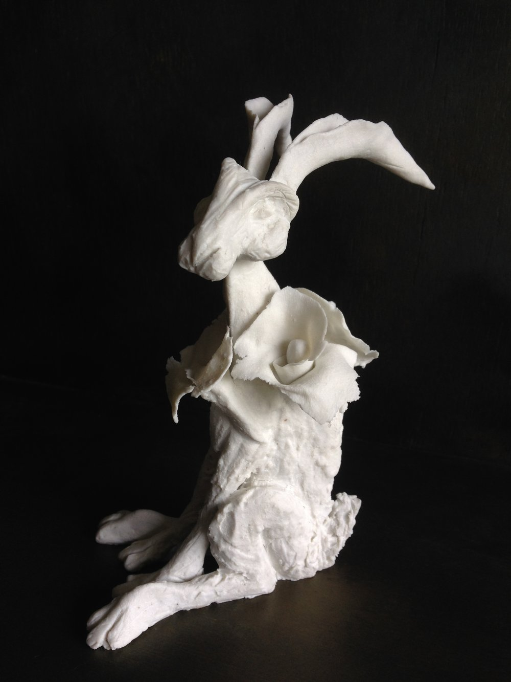 'Collared Hare I'