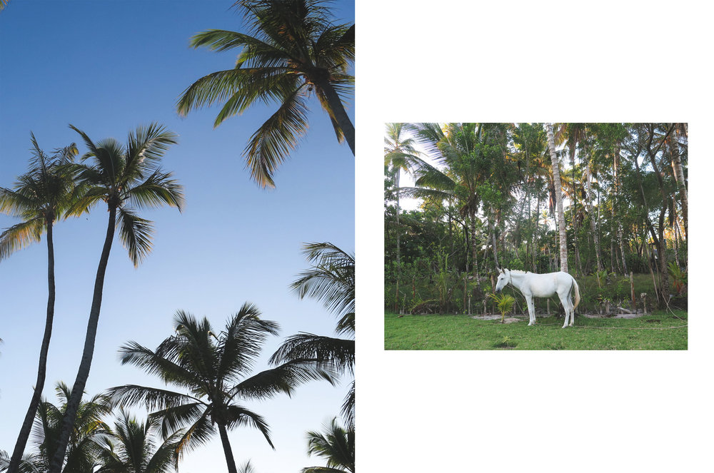 PALMS_HORSE.jpg