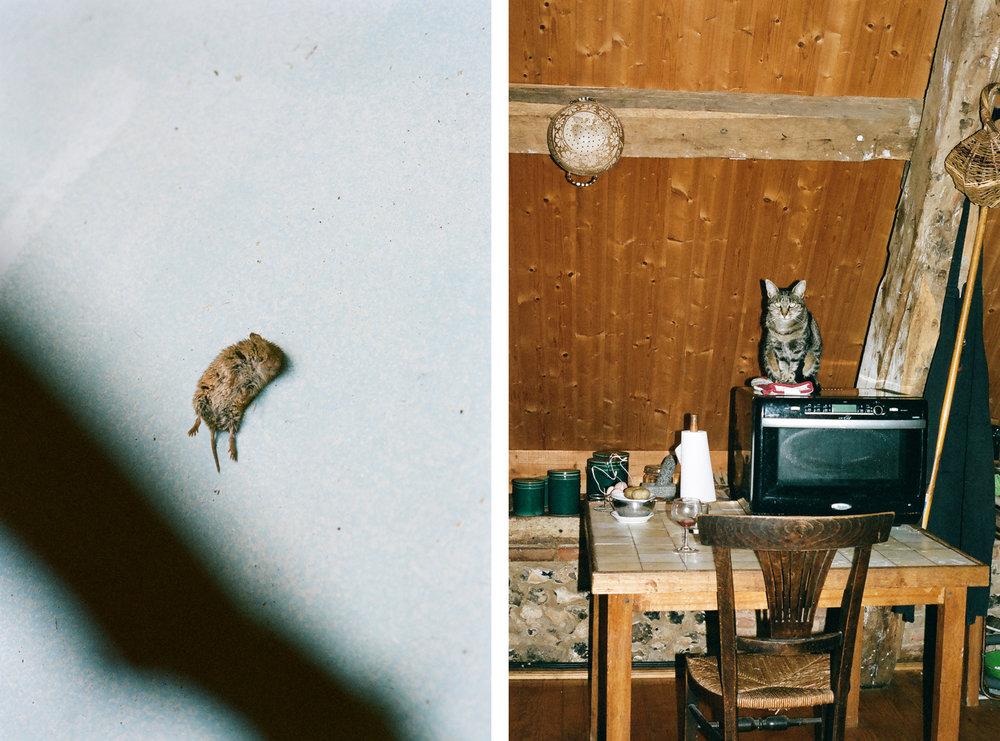 1. MOUSE + CAT.jpg