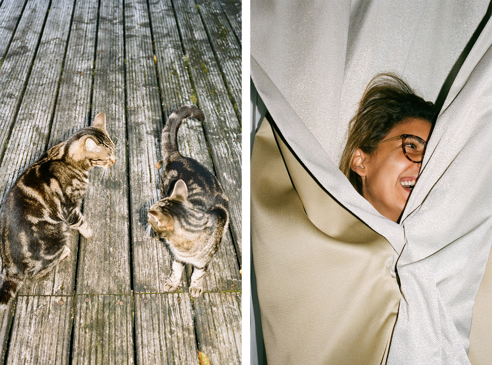CATS + DANYA.jpg