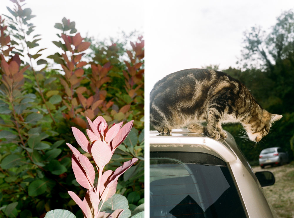 LEAVES + CATS.jpg
