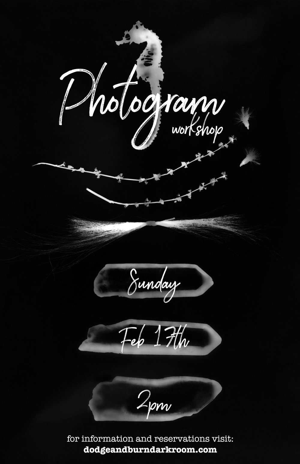 photogram workshop2.jpg