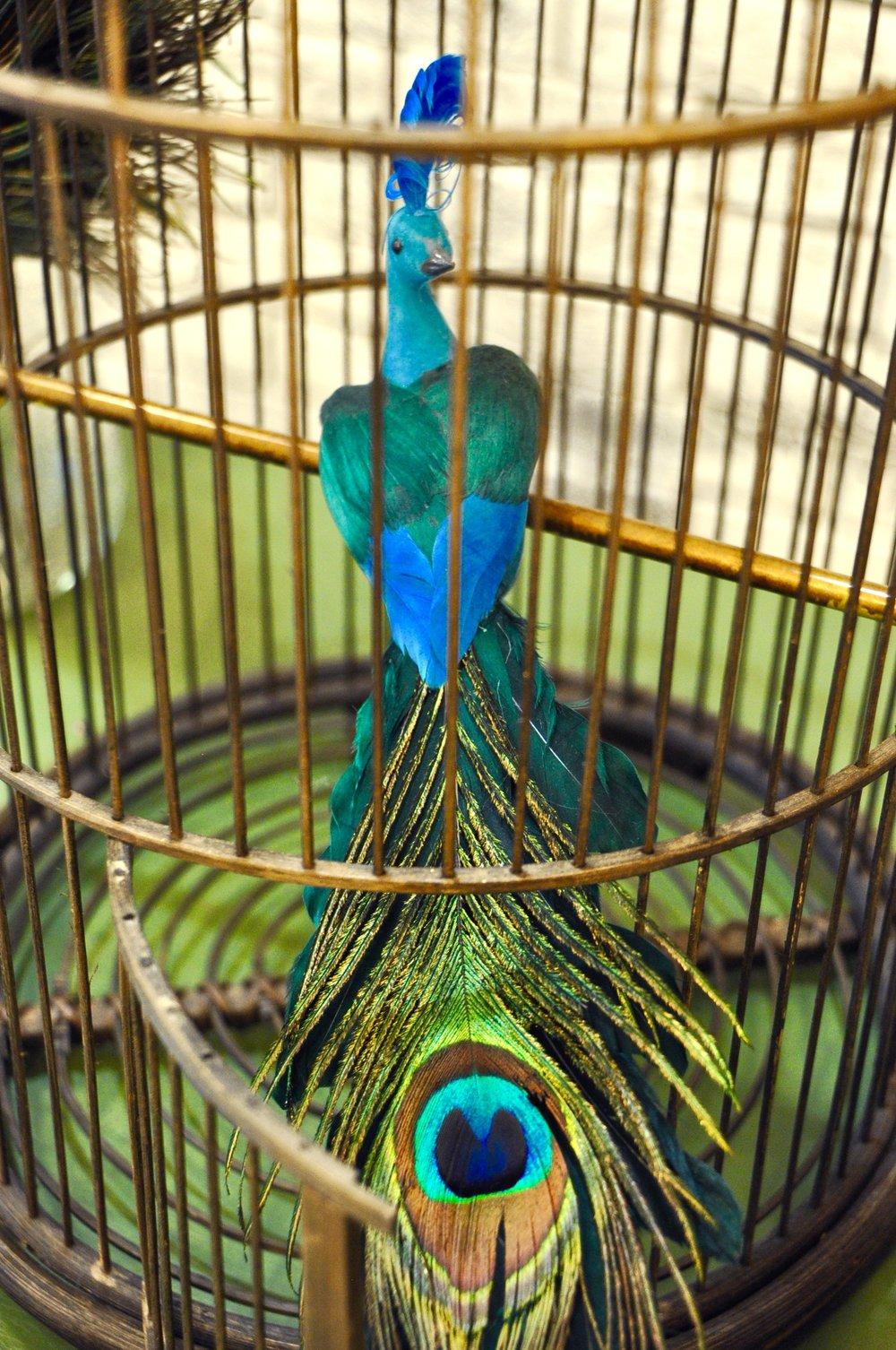 Vogelkäfig Peacock, Pfau