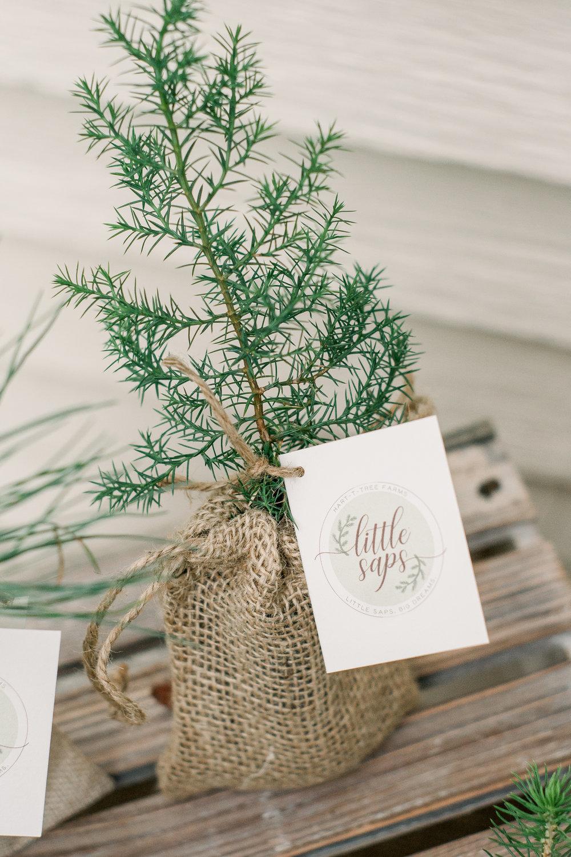 Little Saps - Eastern Red Cedar