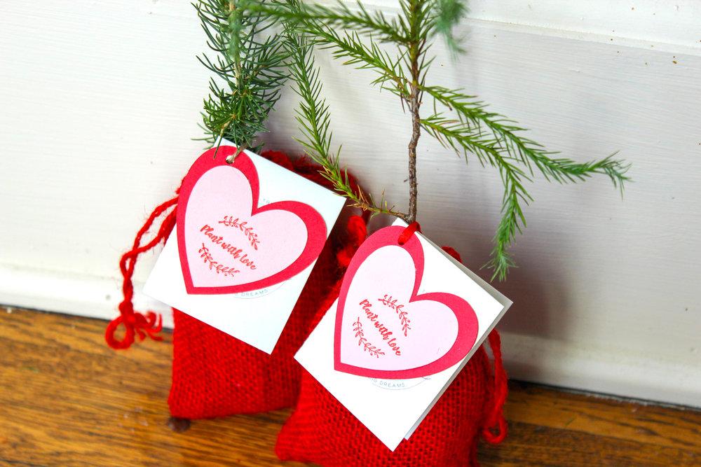 Little Saps Tree Seedlings Valentine's Day