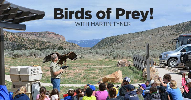birds-prey.jpg