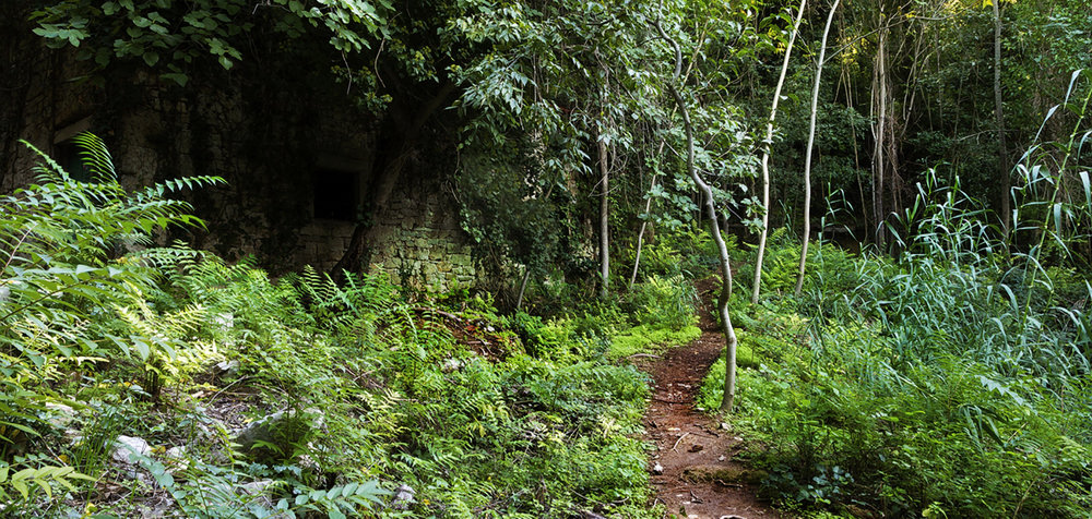 jungle-ruins_path-copy.jpg