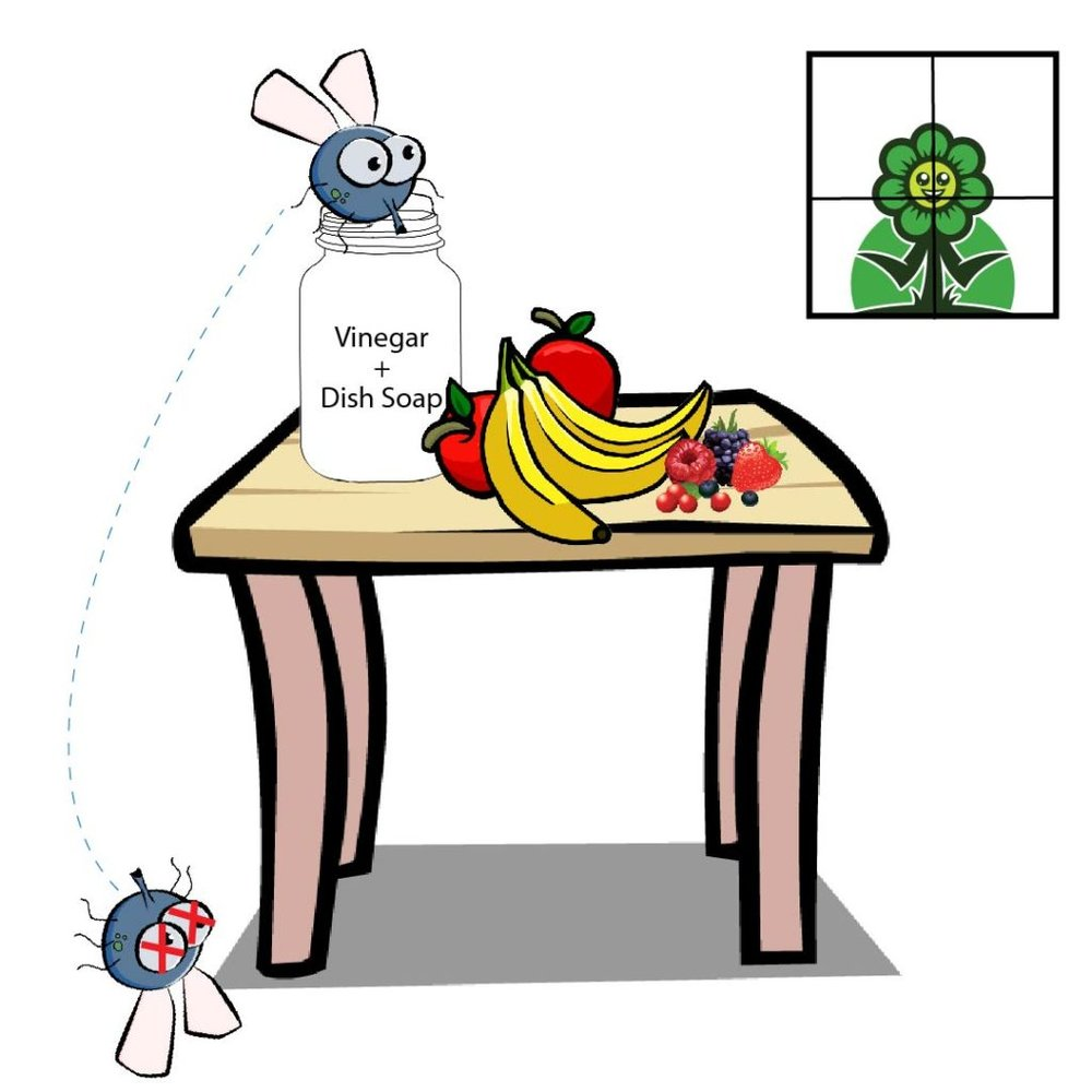 Fruit-Flies-01-1024x1024.jpg