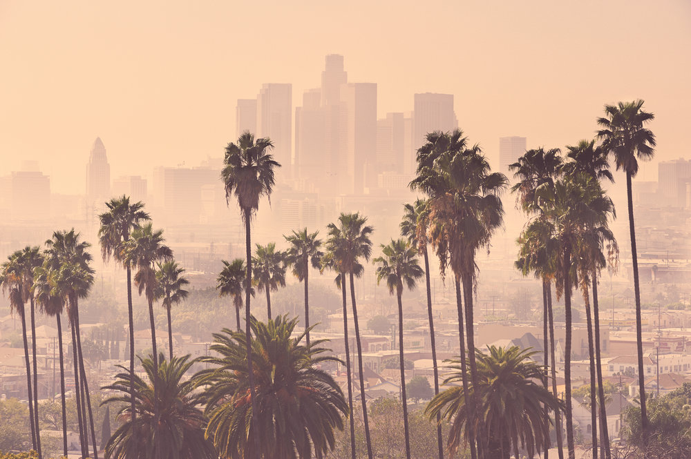LA Palm Trees.jpg