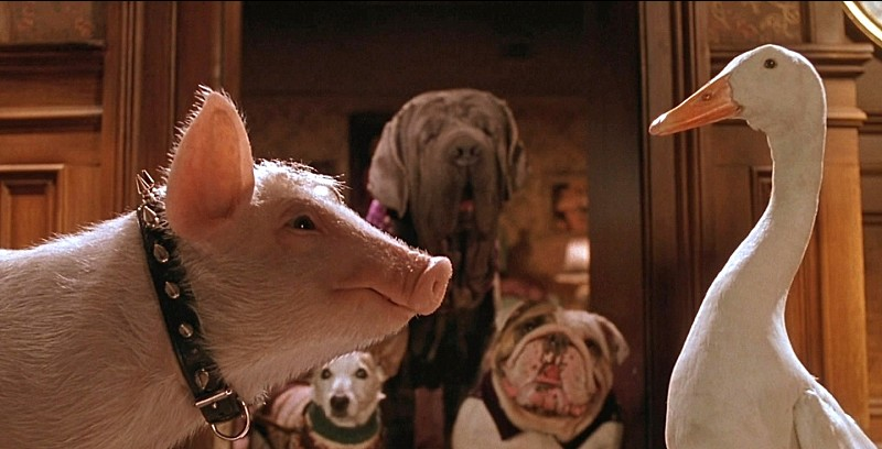 Babe: Pig in the City  - 8 July -   11am   Dismissed as a mere cash-in follow-up to the wildly popular international smash hit  Babe  (1995), this delightfully dark family romp has more than enough action and laughter to thrill kids of all ages.  Buy tickets