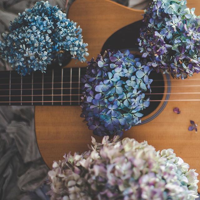 Ohhh the colors of hydrangea blossoms. My absolute favorite. I set up this shot to use on my website, go check it out. www.kaitlincontimusic.com