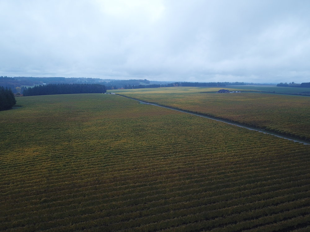 Barnes' Ranch in the midst of the harvest. In the immediate foreground is the Middle Blocks; extending into the distance is the Back Blocks.
