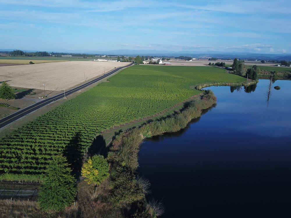 The House Hill Vineyard, with Lake Harold on the right. The short rows in the immediate foreground are home to several different varietal plantings. Proceeding into the distance the order of plantings are Pinot Gris, Muscat and finally Pinot Noir in the furthest distance. In the distant and on the right is the Butsch blocksof the House Hill Vineyard.