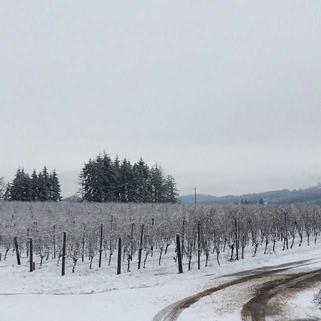 The Rody Vineyard in the midst of a rare winter snowfall. While initially ominous-seeming, snow actually prevents frost damage in vineyards by providing a blanket of protection against cold winds.