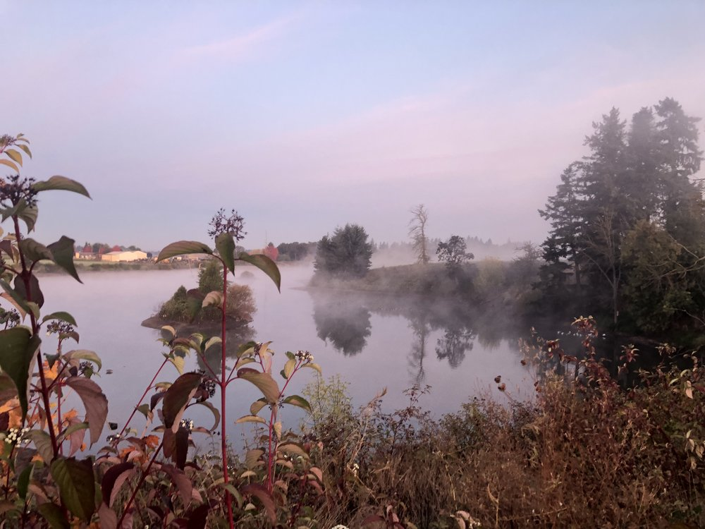 A foggy fall morning over Lake Harold, as viewed from the Butsch Vineyard.