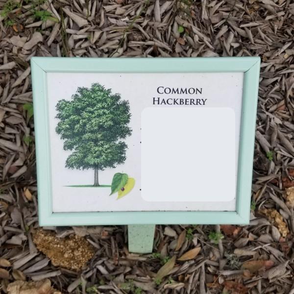 hackberry.jpg