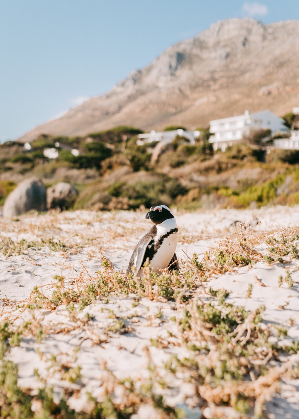 2018-2-15 Cape Town WEB SIZE (122 of 137).jpg