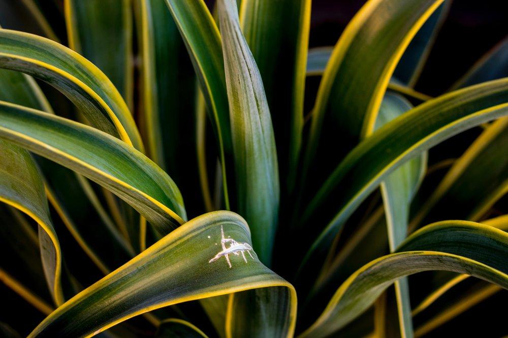 agave-close-up-foliage-776565.jpg