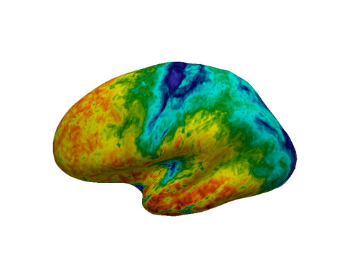 Group average T1 mapped onto an inflated cortical surface.
