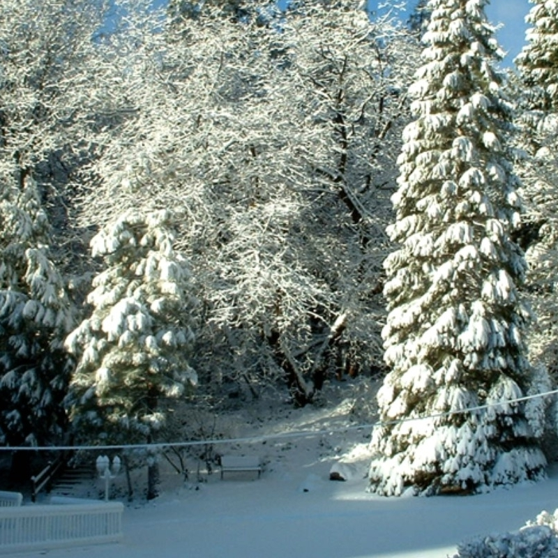Winter Trees 1.jpg