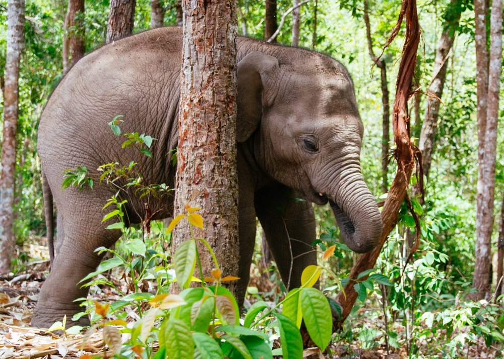 Elephant Jungle Sanctuary by Polly C Photography