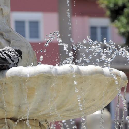 birdbaths-31kgnv0l2vknljjkrxx43k.jpg