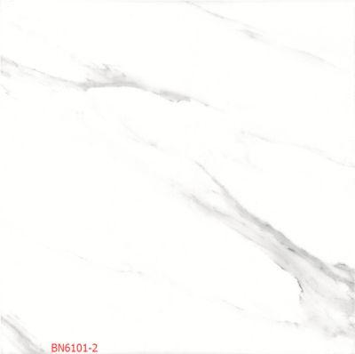 BN6101-2