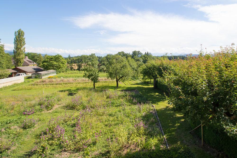 Rosengarten 1.jpg