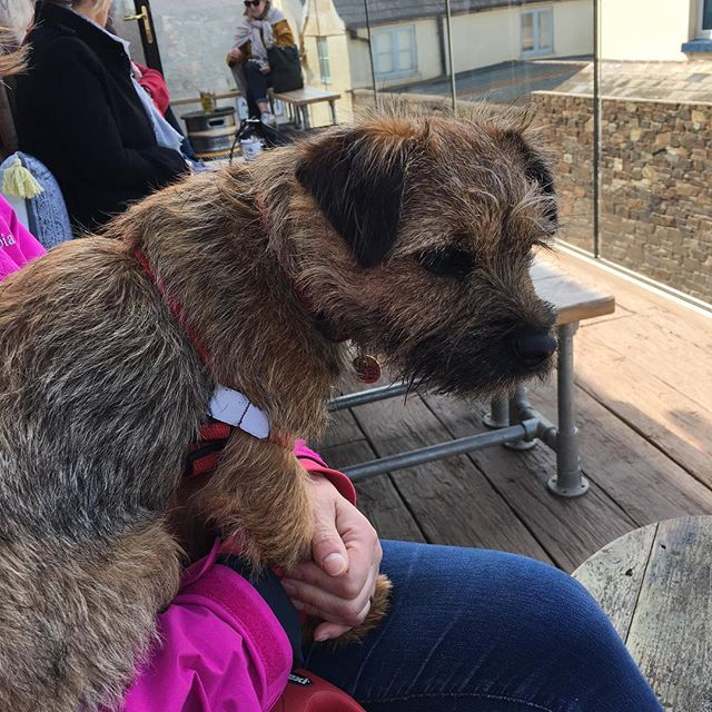Chillin with my homies in Hope Cove. The craft beer 🍺 here is spot on. Not sure Dad liked me sampling his pint though 😂😂