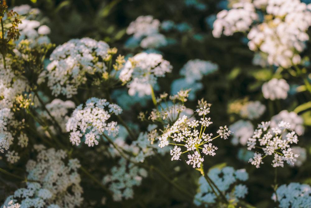 Ringve Botanisk Hage -