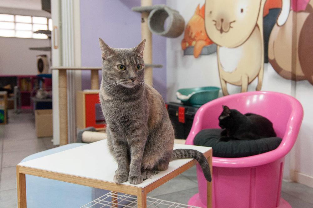 La Gatoteca - Gatos