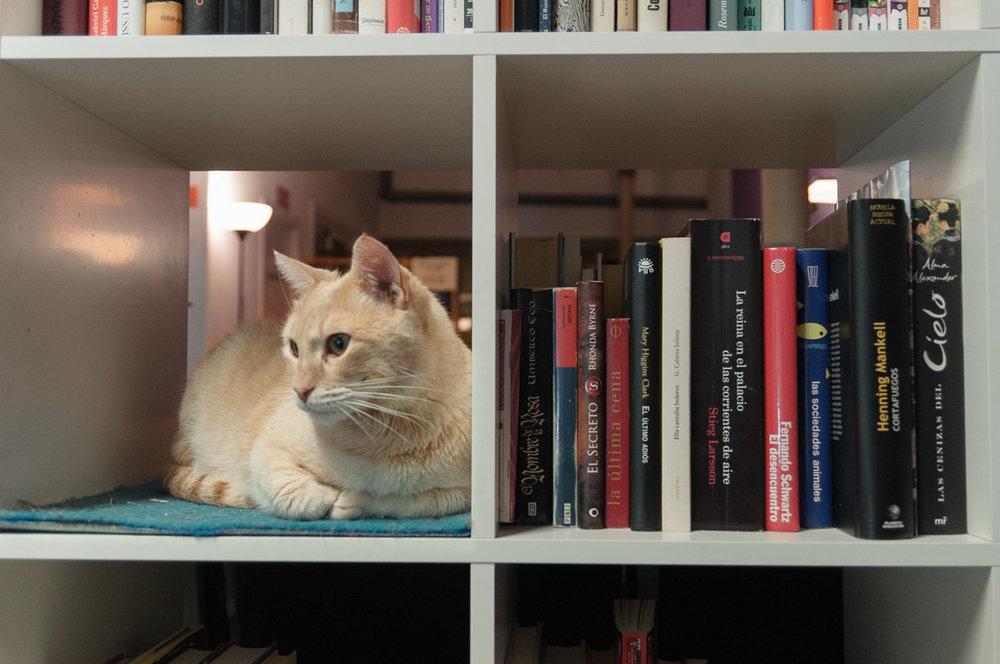 La Gatoteca - biblioteca