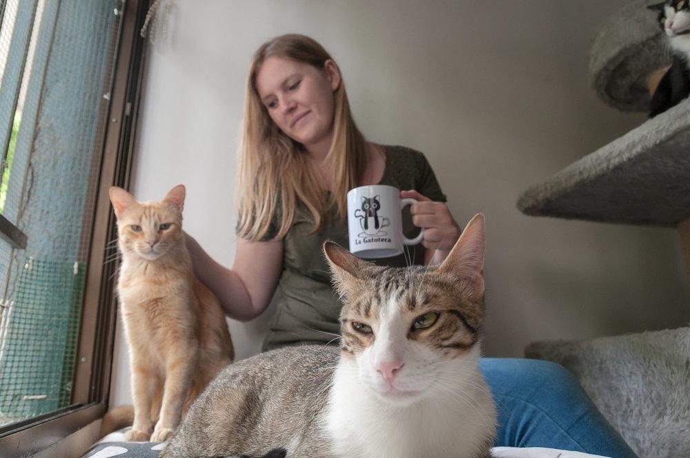 La Gatoteca - café con gatos