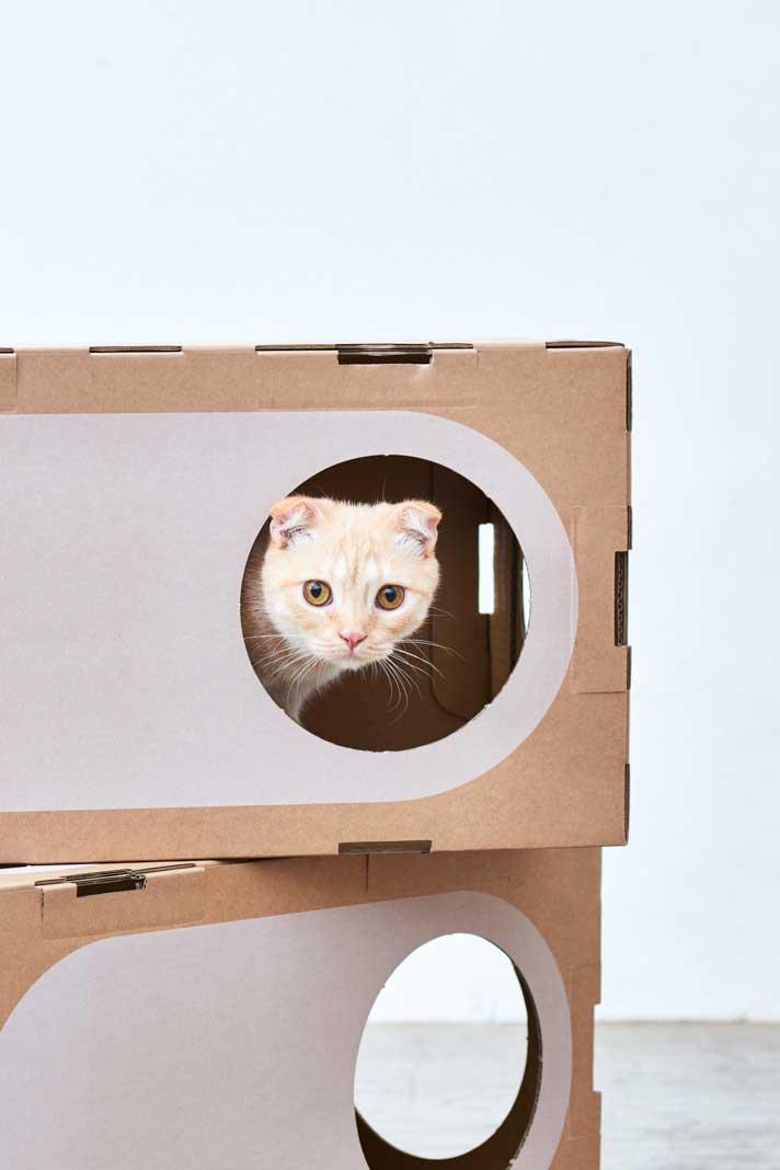 LOS GATOS NECESITAN SU PROPIO ESPACIO - Los humanos necesitamos un ambiente seguro y acogedor para vivir: los gatos también. Entendimos la importancia y necesidad de espacio y seguridad en los gatos desde el momento en que comenzamos a vivir con ellos: parece que se sienten más seguros y relajados en espacios pequeños y delimitados. Creemos que, si compartimos una vivienda, ni humanos ni gatos debemos realizar sacrificios sobre el confort, y debemos convertir el espacio en algo adecuado para ambas especies. Comenzamos a estudiar la relación entre el espacio y las necesidades de los gatos para crear mini-construcciones adecuadas para los felinos. Eso es lo que viene a ser A Cat Thing.