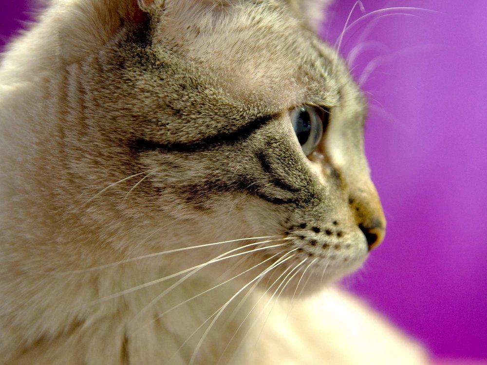 quiero ayudar a los gatetes - Porque con tu cuota ayudas a que a los gatos no les falte de nada, desde alimento a atención veterinaria, así como un hogar temporal y maravilloso como es La Gatoteca.