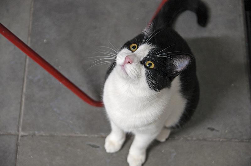 SER SOCIO TIENE PREMIO!! - Ayudar a nuestros gatos tiene recompensa