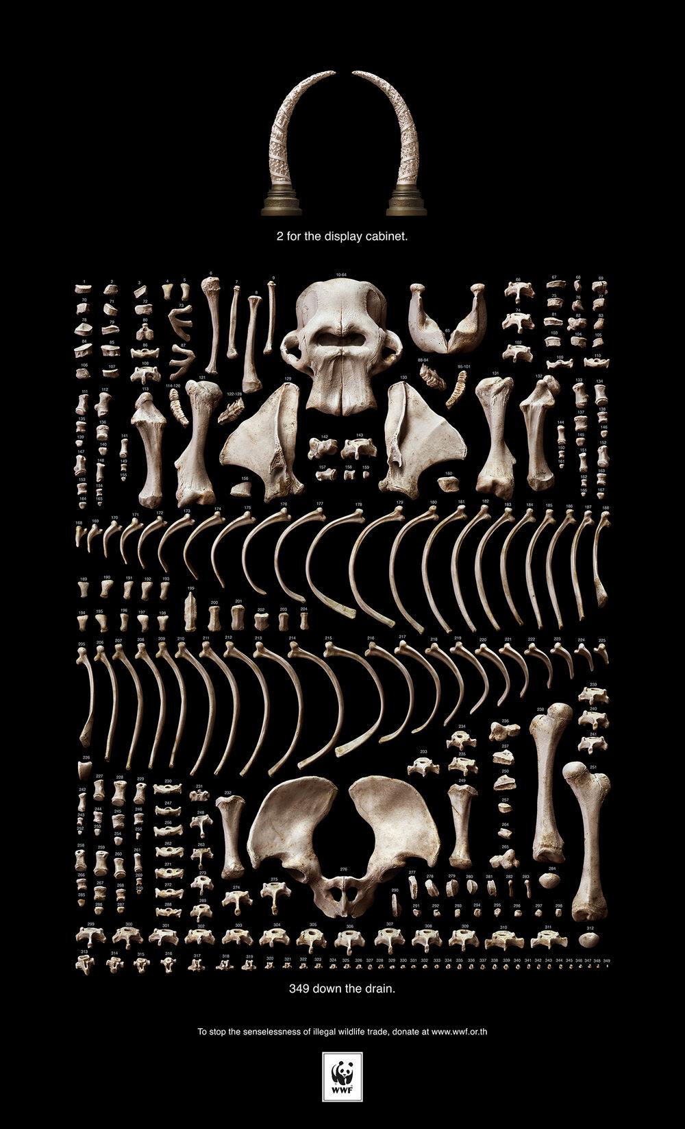 WWF_Elephant_Skeleton_Srgb.jpg