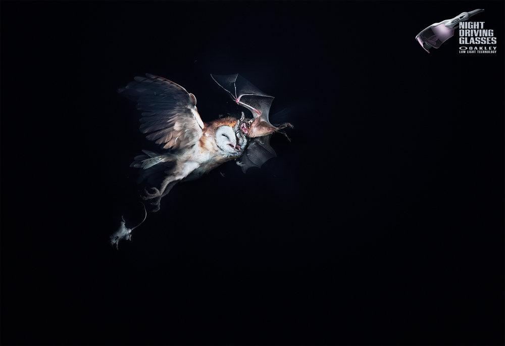 A_Owl VS Bat_18_Srgb.jpg